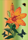 Free Orange Lily And Three Butterflies Royalty Free Stock Image - 18816716