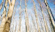 Free Beech Forest Stock Image - 18812451