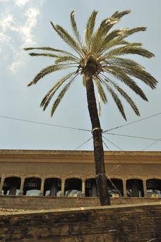 Free City Palm Tree Stock Photos - 18812643