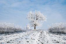 Free Winter Trees Stock Photo - 18813010