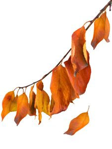 Free Autumn Leaves Royalty Free Stock Photography - 18813017