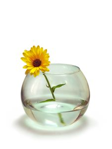 Free Calendula In The Vase Royalty Free Stock Images - 18813139