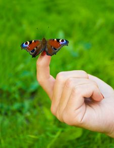 Free Butterfly Sitting On Finger Royalty Free Stock Photography - 18813187