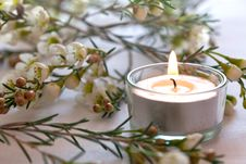 Free Candle And Blossom Stock Images - 18813354