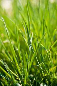 Free Morning Grass Stock Images - 18815024