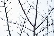 Free Branches In The Winter Royalty Free Stock Photography - 18815297