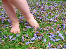 Free Small Child S Feet On Grass Stock Images - 18815684