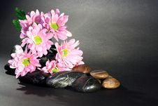 Free Flowers And Stones Stock Photos - 18815733