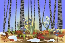 First Flowers In Spring Forest Illustration