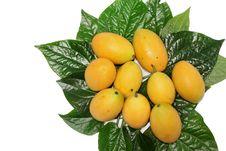 Free Bouea Oppositifolia Stock Images - 18819564