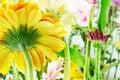 Free Yellow Gerbera Beauty Stock Photos - 18823113