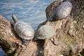 Free Turtles Royalty Free Stock Photo - 18828665