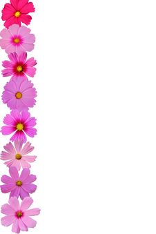 Free Cosmos Flower Stock Photos - 18820653
