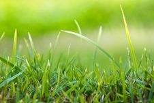 Free Green Grass Background Stock Image - 18821101