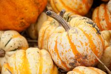 Free Autumn Squash In Shallow Focus. Stock Images - 18821124