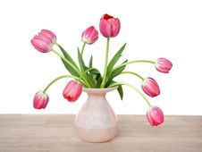Free Pink Red  Tulips Royalty Free Stock Image - 18822106