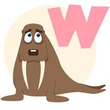 Free The English Alphabet. Walrus Royalty Free Stock Image - 18822276