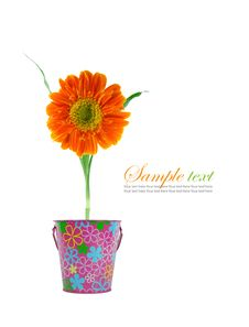 Free Beauty Flower Summer Royalty Free Stock Photo - 18823145