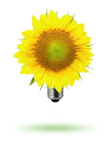 Free Eco-sun Flower Royalty Free Stock Photography - 18823307