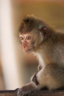 Free Little Monkey Stock Photos - 18823893