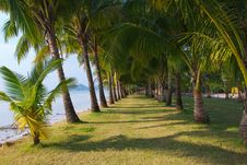 Free Long Palm Grove Royalty Free Stock Photo - 18823915