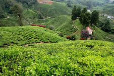 Free Cameron Highlands Royalty Free Stock Images - 18823969
