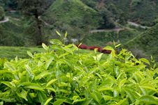 Free Cameron Highlands Stock Photography - 18823982