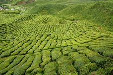 Free Cameron Highlands, Malaysia Stock Photo - 18824250