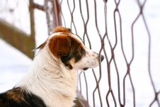 Winter Portrait Of A Beautiful Dog Royalty Free Stock Images