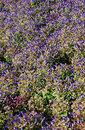 Free Blooming Flower Bed From Above Stock Image - 18832161