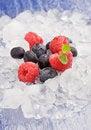 Free Berries On Ice Stock Photo - 18833220