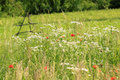 Free Meadow Royalty Free Stock Photography - 18835877