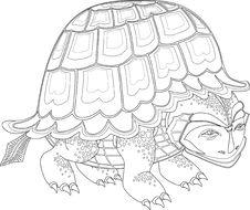 Free Turtle Royalty Free Stock Photos - 18830858
