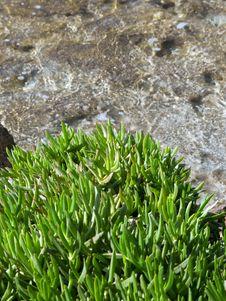 Free Marine Landscape Stock Photo - 18831610