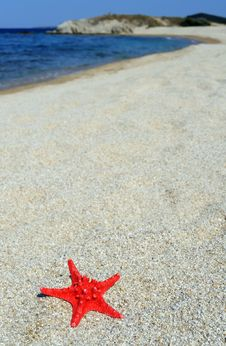 Free Red Sea Star On Beach Royalty Free Stock Photos - 18833328