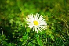 Free Daisy Close Up Royalty Free Stock Photos - 18835198