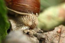 Free Snail Stock Photos - 18836363