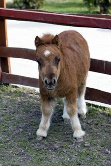Free Baby Pony Royalty Free Stock Photo - 18837175
