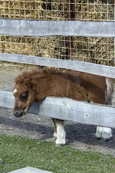Free Baby Pony Stock Photo - 18837200