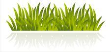 Free Grass Isolated On White Stock Photos - 18838043