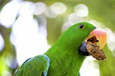 Green Macaw Portrait Royalty Free Stock Photography