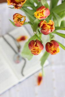 Free Tulips Royalty Free Stock Photos - 18838818