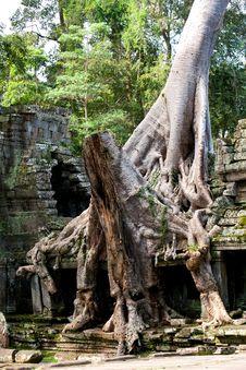 Free Overgrown Ruins- Cambodia Stock Image - 18839561