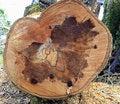 Free Tree Stump Royalty Free Stock Image - 18841316