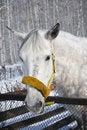 Free Grey Horse 3 Stock Image - 18849281
