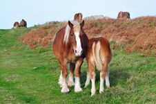 Free Horses In Brittany Royalty Free Stock Photo - 18840245