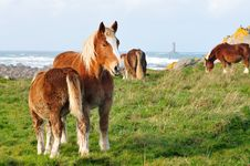 Free Horses In Brittany Stock Photos - 18840283
