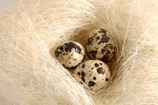 Free Quails Eggs Royalty Free Stock Image - 18842586