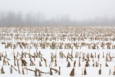 Free Corn Rows Royalty Free Stock Photos - 18844018