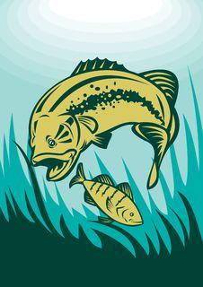 Free Largemouth Bass And Perch Fish Stock Photo - 18844320